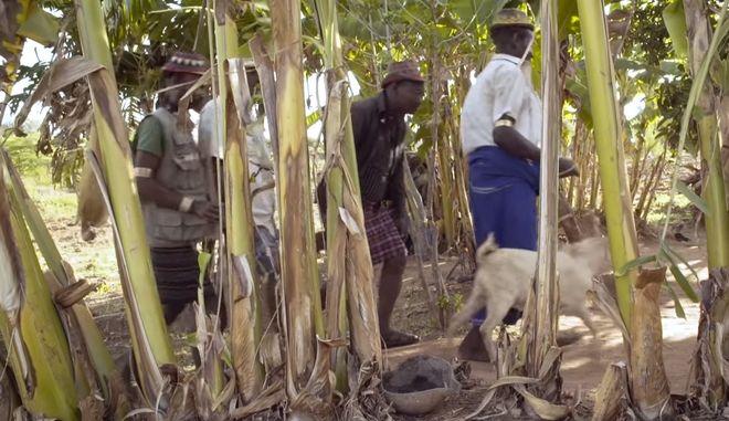 Αιθιοπία: Φύτεψαν 350 εκατ. δέντρα σε μια μέρα για την κλιματική αλλαγή