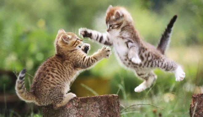Γάτες: Μας ακούνε αλλά.... μας γράφουν