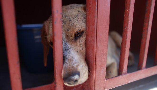 Σκύλος σε κλουβί (ΦΩΤΟ Αρχείου)