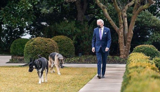 ΗΠΑ: Εκτός Λευκού Οίκου τα σκυλιά του Μπάιντεν - Τι συνέβη
