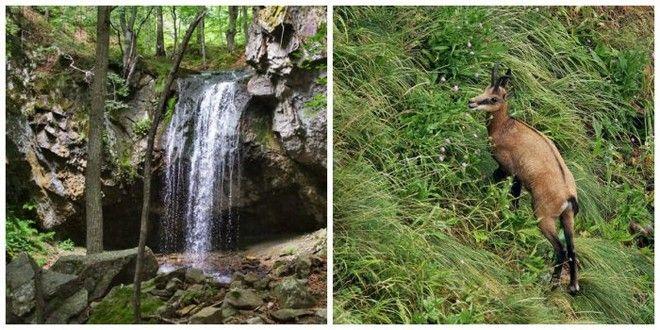 Μηχανή του Χρόνου: Το μαγευτικό, παρθένο δάσος της Ροδόπης