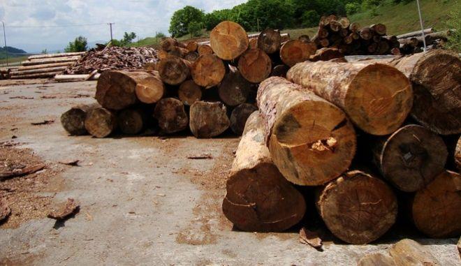 Η Γαλλία θα εισάγει ξυλεία από τις ΗΠΑ