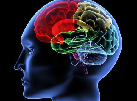 Αποτέλεσμα εικόνας για ανθρώπινοσ εγκέφαλοσ