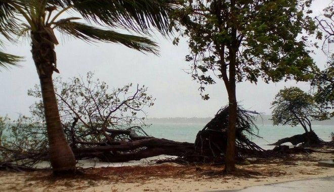 A tree lays on the shore of Sainte-Anne on the French Caribbean island of Guadeloupe, early Tuesday, Sept. 19, 2017, after the passing of Hurricane Maria. (AP Photo/Dominique Chomereau-Lamotte)