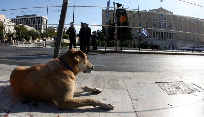 Αδέσποτος σκύλος έξω από τη Βουλή