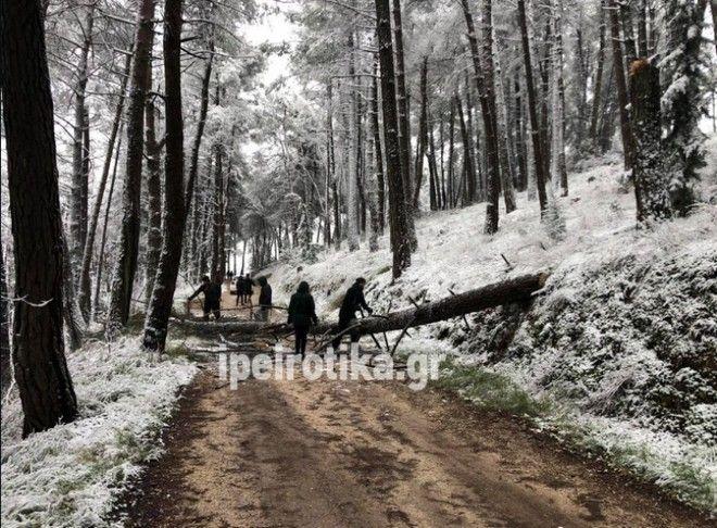 Δέντρο έπεσε δίπλα σε περαστικούς στα Γιάννενα