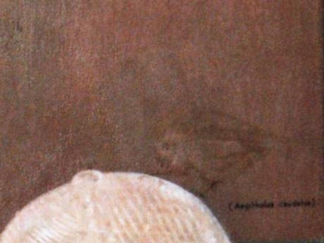 Πίνακες ζωγραφικής με καλά κρυμμένα μυστικά. Μπορείς να τα βρεις;