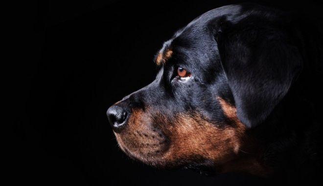 Φονική επίθεση σκύλων σε παιδί στην Κοζάνη: Αποζημίωση ζητεί ο ιδιοκτήτης από τη μητέρα