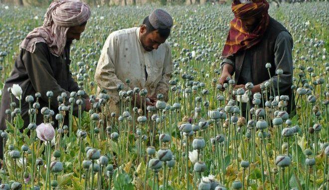 Αφγανοί αγρότες μαζεύουν όπιο