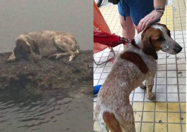 Φωτιά στο Μάτι: Το σκυλάκι που έγινε σύμβολο επιβίωσης - Πώς σώθηκε