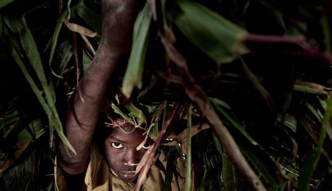 Παιδί κουβαλάει φύλλα στη Ρουάντα