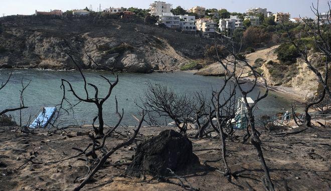 Τους 81 έφτασαν οι ταυτοποιημένοι νεκροί από την φονική πυρκαγιά στο Μάτι