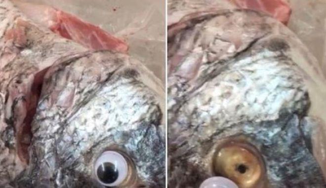 Ιχθυοπωλείο κολλούσε ψεύτικα μάτια στα ψάρια για να φαίνονται φρέσκα