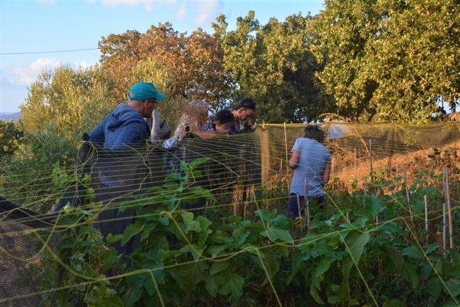 Η Νίσυρος καλλιεργεί… Τσέχους φοιτητές