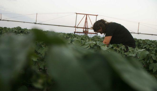 Αγρότισσα στην Καρδίτσα