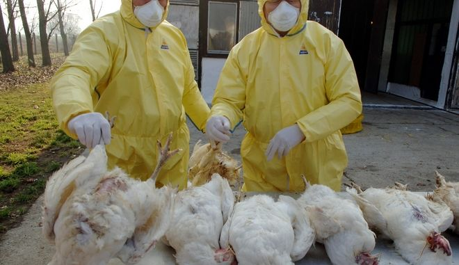 Γρίπη των πτηνών στην Ουγγαρία