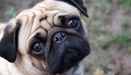 Ποιος θα πάρει τον σκύλο μετά το διαζύγιο; Η σύγχρονη δικαστική διαμάχη...
