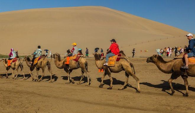 Καμήλες στο Dunhuang της Κίνας