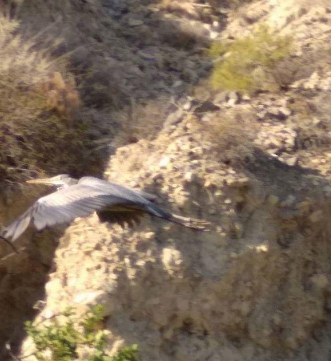 Το περίφημο πτηνό που έγινε viral
