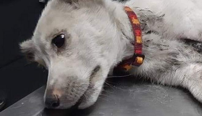 Το βασανισμένο σκυλάκι.