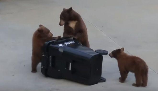 Αρκούδες εναντίον κάδου απορριμάτων σημειώσατε 2