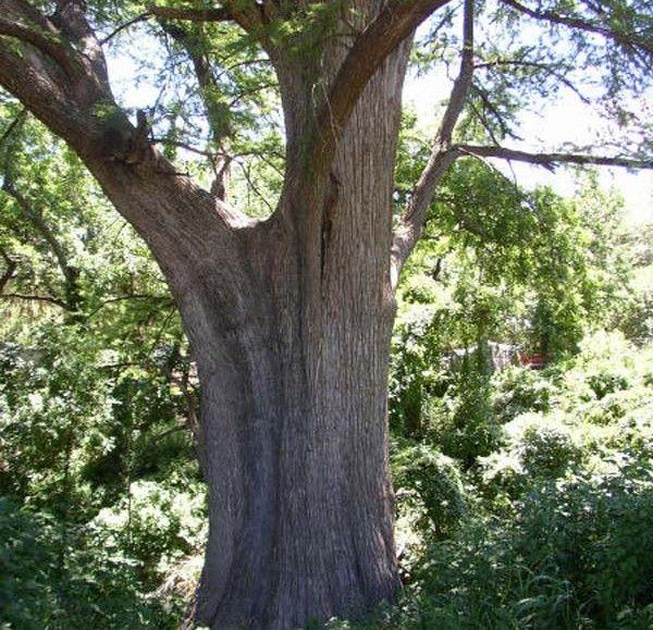 Κινέζος καλλιτέχνης μετατρέπει έναν κορμό δέντρου σε αριστούργημα