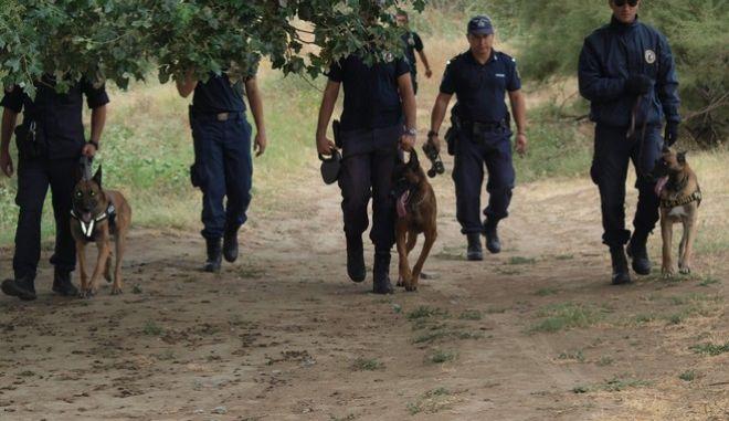 Δεκαέξι (16) εκπαιδευμένοι αστυνομικοί σκύλοι, που μεταφέρθηκαν στον Έβρο, συνδράμουν από σήμερα τις περιπολίες και τις έρευνες, που πραγματοποιούνται στην ευρύτερη περιοχή, στο πλαίσιο της επιχείρησης «Ξένιος Ζευς». Οι αστυνομικοί σκύλοι και οι συνοδοί τους αστυνομικοί έχουν κατανεμηθεί από οχτώ (8) σε Αλεξανδρούπολη και Ορεστιάδα, και αναμένεται να βελτιώσουν την επιχειρησιακή ετοιμότητα και ανταπόκριση των αστυνομικών δυνάμεων στην αντιμετώπιση της παράνομης μετανάστευσης. Οι αστυνομικοί σκύλοι έχουν εκπαιδευτεί από στελέχη της Ελληνικής Αστυνομίας ως σκύλοι «περιπολίας» και είναι ράτσας Μαλινουά και Γερμανικοί ποιμενικοί. (EUROKINISSI/ΓΡΑΦΕΙΟ ΤΥΠΟΥ ΕΛ.ΑΣ.)