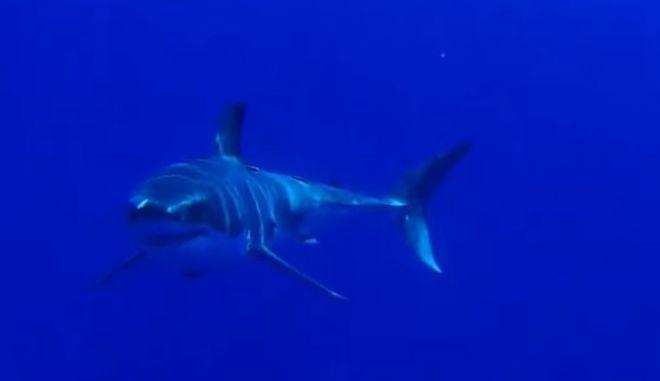 Καρέ καρέ: Πώς είναι να σε τρώει καρχαρίας