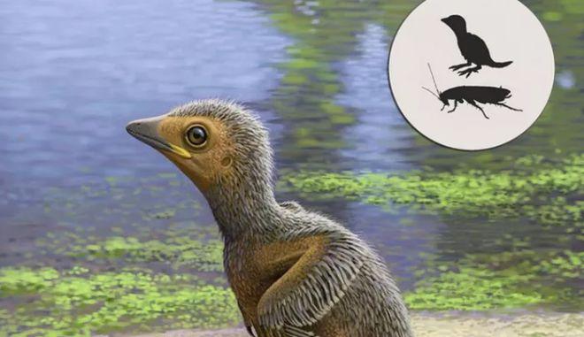 Το πιο αρχαίο νεογέννητο πτηνό της ιστορίας ήταν στο μέγεθος κατσαρίδας