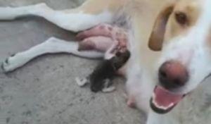 'Άνθρωπος' πέταξε γατάκι στα σκουπίδια, σκυλίτσα το 'αγκάλιασε'