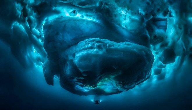 Υποβρύχια φωτογραφία παγούβουνου