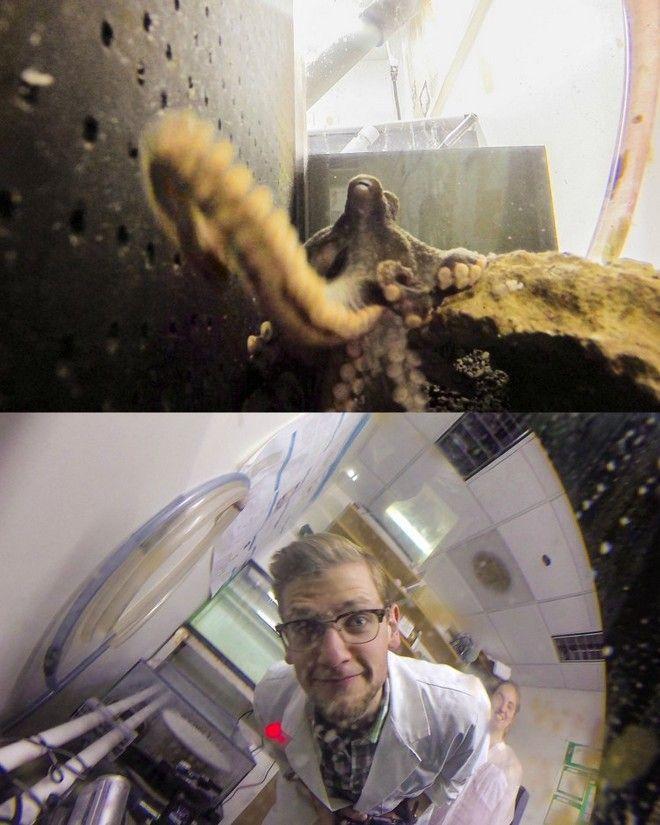 Έξυπνο χταπόδι κλέβει τη φωτογραφική και βγάζει φωτογραφίες από το κλουβί του