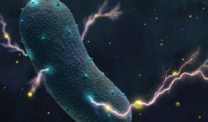 Τα βακτήρια του εντέρου παράγουν ηλεκτρικό ρεύμα