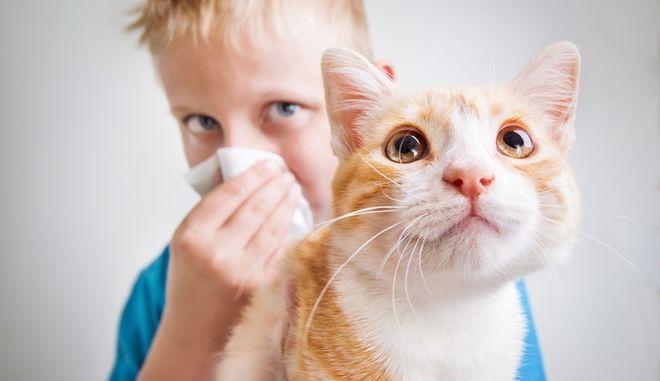 Μικρό αγόρι με αλλεργία στις γάτες
