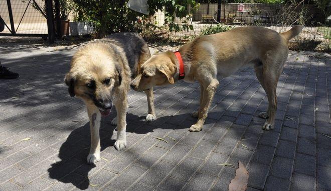 ΑΡΓΟΣ-26072017-Η Φρίντα και ο Κανέλλος ξανά ελεύθεροι στο Άργος.Ελεύθερα αφέθηκαν, υγιή και στειρωμένα ,τα δύο αδέσποτα σκυλάκια που είχε μαζέψει ο δήμος από το κέντρο της πόλης .Ο δήμος Άργους βΜυκηνών έχει ξεκινήσει ένα πρόγραμμα για τους αδέσποτους φίλους μας που περιλαμβάνει περίθαλψη, αποπαρασίτωση, στειρώσεις, εμβολιασμούς, οπτική σήμανση  , τσιπάρισμα και επανατοποθέτηση των αδέσποτων. Παράλληλα ο αντιδήμαρχος Νίκος Γκαβούνος έχει ήδη τοποθετήσει ταΐστρες και ποτίστρες με φλοτέρ σε διάφορα σημεία του δήμου για την καλύτερη διαβίωση των αδέσποτων.(eurokinissi-Βασίλης Παπαδόπουλος)