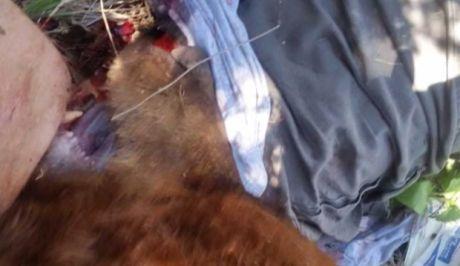 Τον δάγκωσε αρκούδα, πέσαν από τον γκρεμό, την πυροβόλησε και της κόψαν το κεφάλι