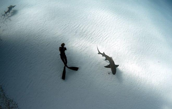 Όταν κοιτάς τον καρχαρία από κοντά