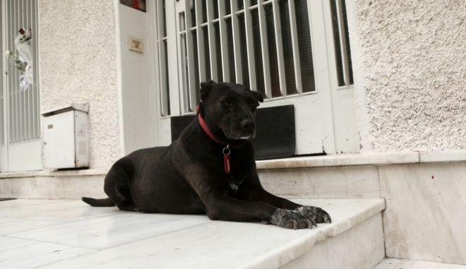Ο σκύλος του Μίκη Θεοδωράκη ξαπλωμένος στο πλατύσκαλο του σπιτιού του