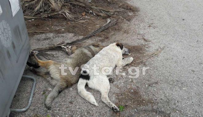 Αποτρόπαιες δολοφονίες αδέσποτων στη Φθιώτιδα