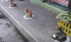 Γάτες στις Φιλιππίνες