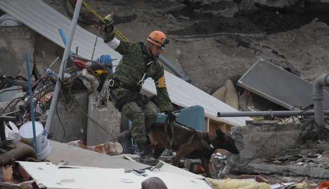A Mexican rescue worker and search dog resume their work on the site of a felled office building in the Roma Norte neighborhood, after evacuating the area due to an aftershocks, in Mexico City, Saturday, Sept. 23, 2017. A strong aftershock rolled through Mexico City, Saturday morning, swaying buildings and sending some people running into the street. (AP Photo/Moises Castillo)