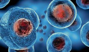 Κύτταρα