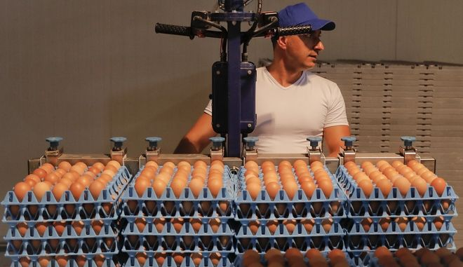 A man handles eggs at a processing plant in Gaesti, southern Romania, Friday, Aug. 11, 2017. The European Union said Friday that it plans to hold an extraordinary meeting late next month over a growing tainted egg scandal as it revealed that products contaminated with an insecticide have now spread to 17 countries. (AP Photo/Vadim Ghirda)