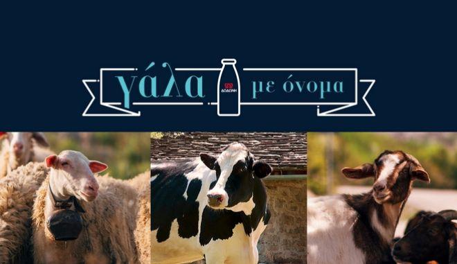Η ΔΩΔΩΝΗ γιορτάζει την Παγκόσμια Ημέρα Γάλακτος για 4η συνεχόμενη χρονιά