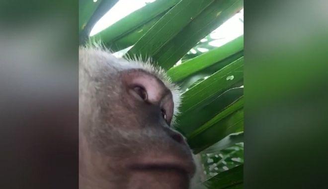 Βρήκε το τηλέφωνό του στη ζούγκλα, γεμάτο selfies πιθήκων