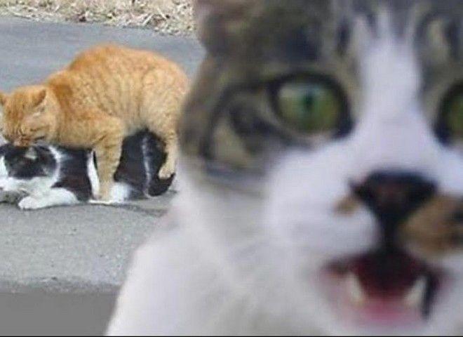 Όταν τα ζώα κάνουν photobombing