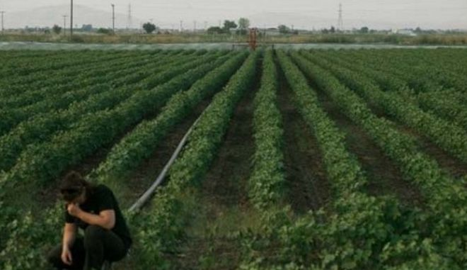 Μπαράζ συλλήψεων αγροτών στα Φάρσαλα