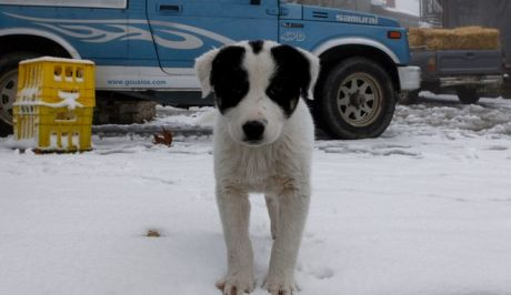 Χιόνια στο Κίσσαβο (Φωτογραφία αρχείου)