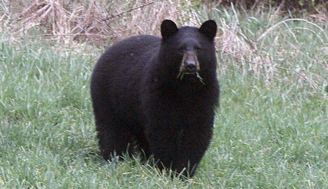 Ξύπνησε από τον ήχο των δοντιών αρκούδας που μασούσε το κεφάλι του