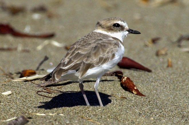 Διάφορα είδη ζώων δεν μπορούν να επιβιώσουν γιατί οι φωλιές τους καταστρέφονται από την κλιματική αλλαγή.